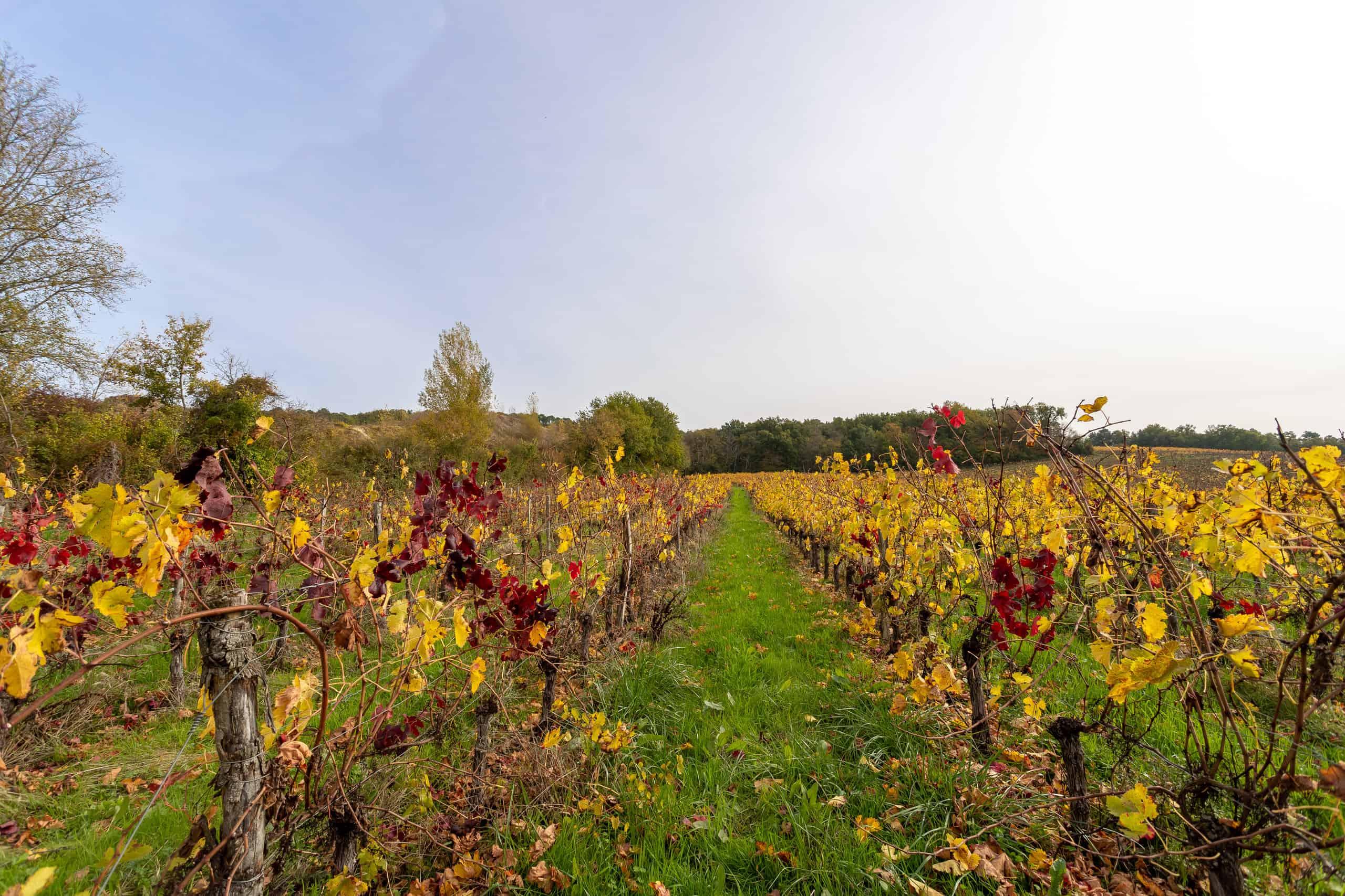 vineyard-WMC023