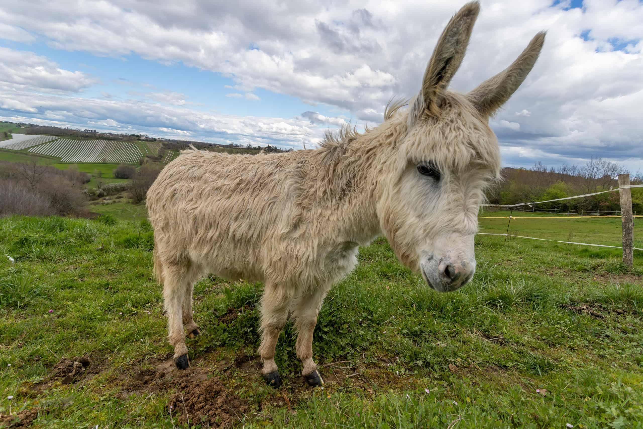 Donkey-WMC056