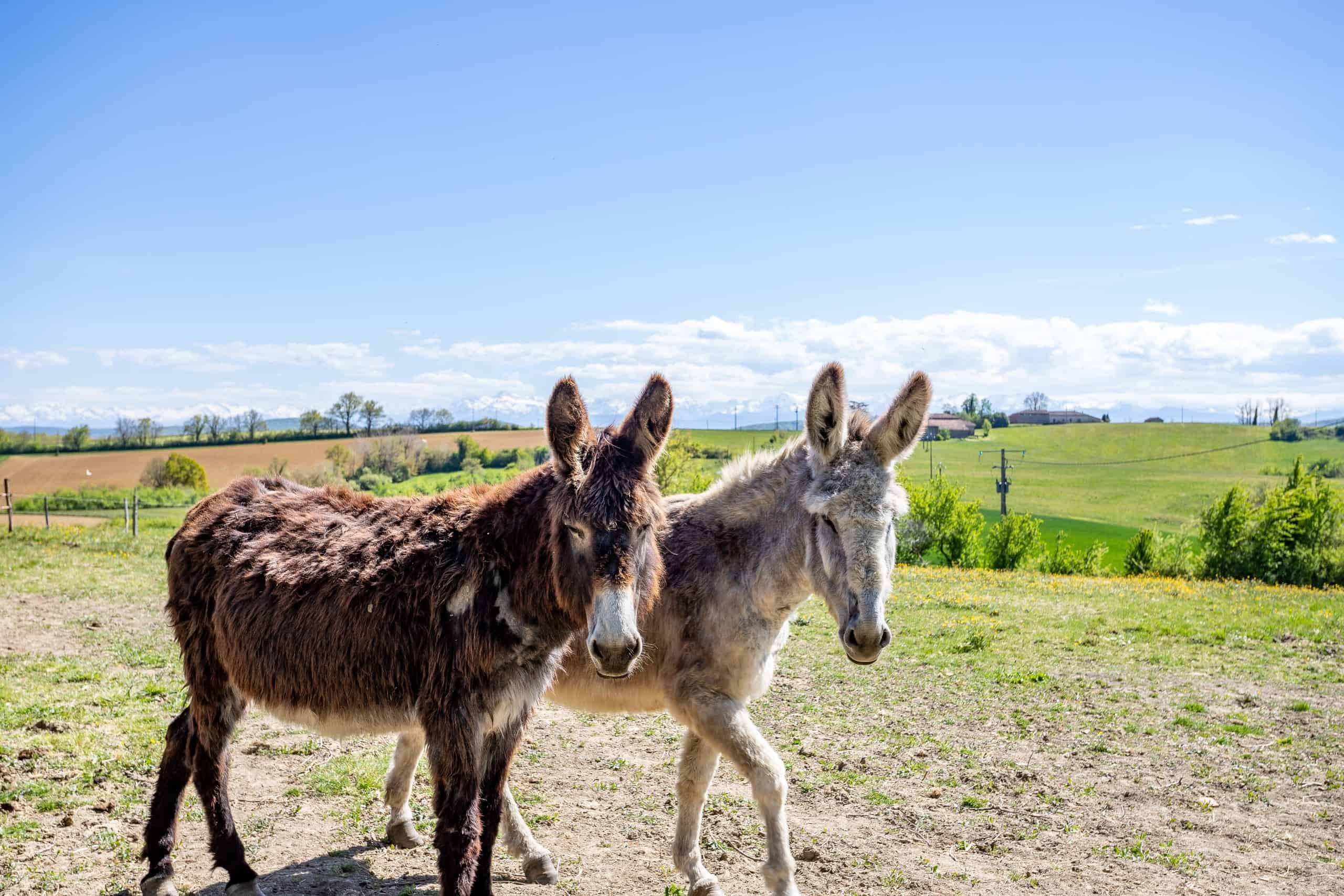 Donkeys-WMC070