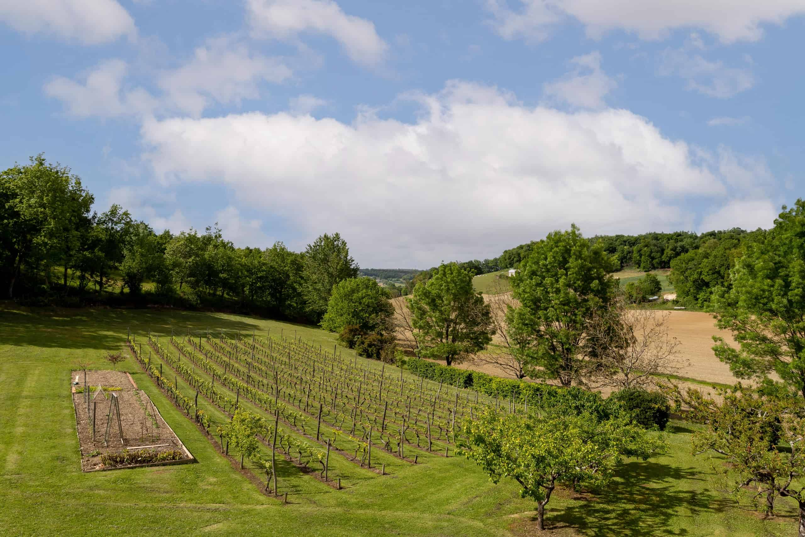 Vue sur la vigne-WMC073